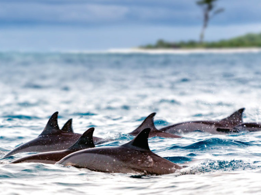 Dolphins-at-Balck-River-in-Mauritius-1024x576