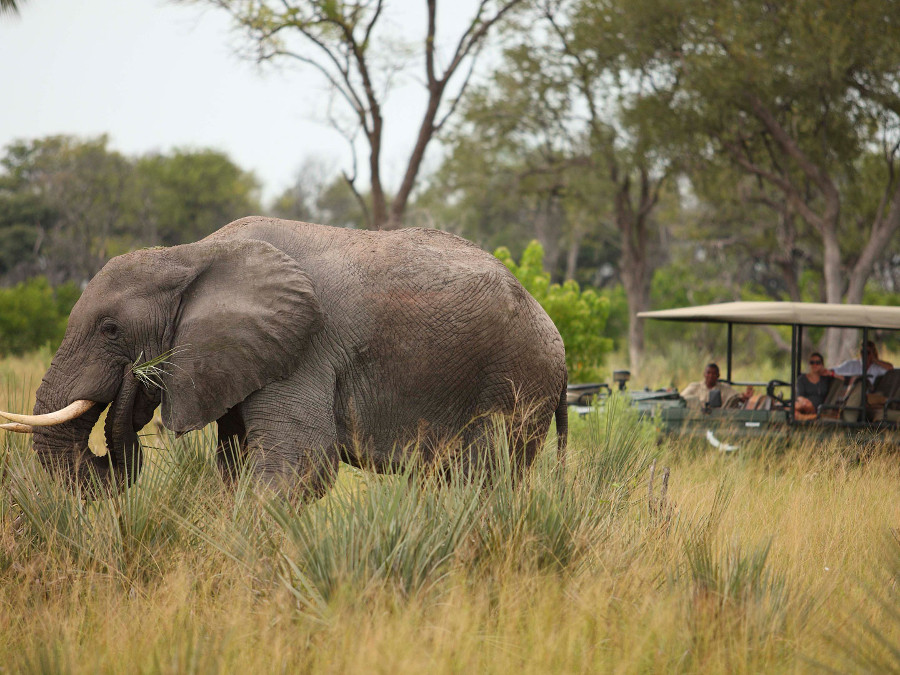 Elephant-encounter-on-a-game-drive-in-Botswana