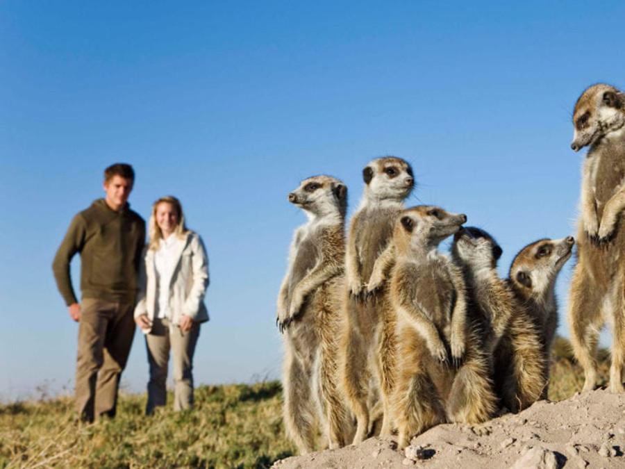 Meerkat-Family-in-Makgadigadi-Pans-1024x576