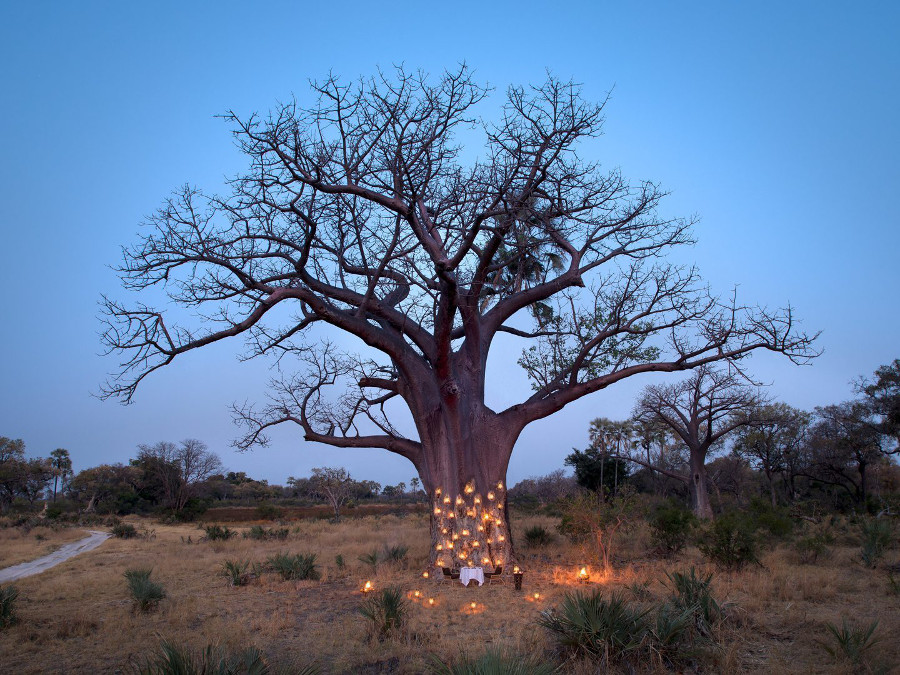 dining-underneath-a-baobab-in-botswana